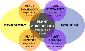 frontiers morphological plant modeling unleashing geometric and