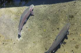 hidden freebies around cape sandwich fish hatchery