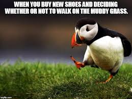 Buy All The Shoes Meme - unpopular opinion puffin memes imgflip