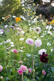 nice design cut flower garden perfect decoration cut flower garden
