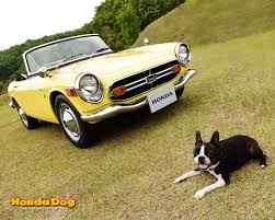 honda convertible look at this boston terrier and classic honda s800m convertible