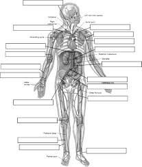 skeletal system without labeling skeleton label worksheet with