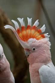 130 best australian animals images on pinterest aussies