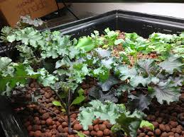 10 healthy edible plants you can grow indoors