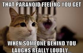 Kitty Meme - 25 funny cat memes that will make you lol