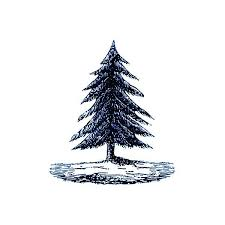 tattly designy temporary tattoos pine tree by fiona richards