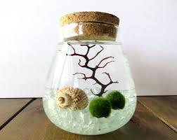 organic terrariums marimo aquariums u0026 natural by tinyterrains
