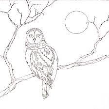 Oak Tree Drawing Drawing For Oak Moon Drum Dragonfly Spirit Studio