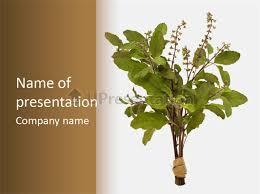 ayurvedic stem india powerpoint template id 0000065013
