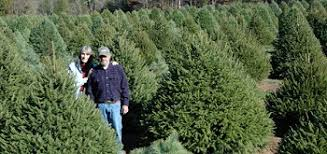 northeast new jersey tree farms choose and cut