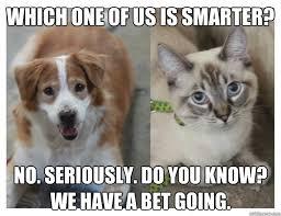 Cat And Dog Memes - whos smarter dog vs cat memes quickmeme