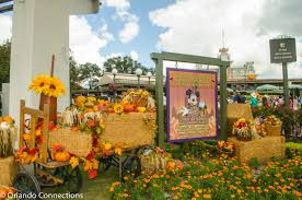 Halloween And Fall Decorations - disney is decorated for halloween orlando connections