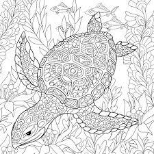 cartoon turtle swimming among sea algae hand drawn sketch for