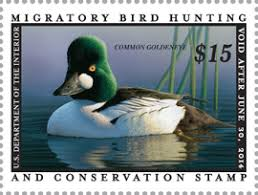 where to buy duck seven reasons to buy a duck st playa lakes joint venture