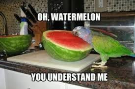 Parrot Meme - only you watermelon parrots know your meme