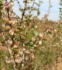 Best Fruit Trees For North Carolina - freeze damage to local fruit crops nc state extension