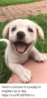 Puppy Memes - here s a picture of a puppy to brighten up ur day httpstcoplg5tgfj1u