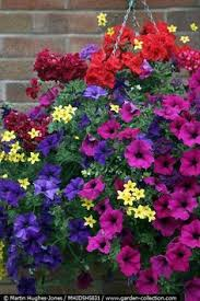 Summer Flower Garden Ideas - hanging baskets google search pretty pinterest flower