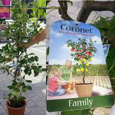 family tree garden center gardens u0026 plants ireland vibrant ireland
