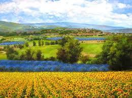 single sun flower wallpapers flower wallpapers page 384 rose water single yellow flower summer
