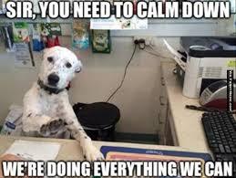 Calm Down Meme - dog memes calm down sir animal memes pinterest dog memes