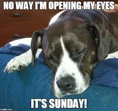 Im Sleepy Meme - dog sleepy sunday imgflip