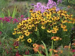 autumn flowers top ten flowers for an autumn border saga