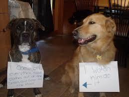 Dog Shaming Meme - dog shaming mindless drivel makes me giggle dog shaming dog