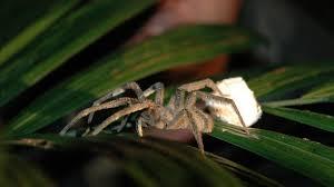 true adventures of the ultimate spider hunter secrets of spider