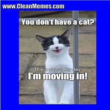 Clean Cat Memes - cat memes clean memes the best the most online page 7