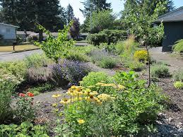 backyard habitat providing community for birds and wildlife