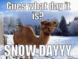 Hump Day Camel Meme - camel memes 24 wishmeme
