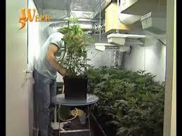 chambre culture indoor culture cannabis indoor part 2