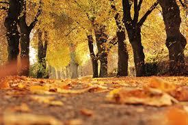 New York State Fall Foliage Map by Wanderu Blog Wanderu