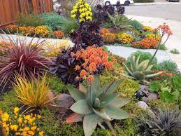 Heat Resistant Plants Modern Drought Resistant Landscaping Articlespagemachinecom