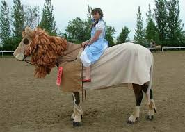 Funny Halloween Animal Costumes 165 Horse Costume Images Horses Horse