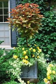 21 best coleus images on pinterest a small big garden and blog