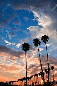 silhouettes of palm trees at sunset in santa barbara california