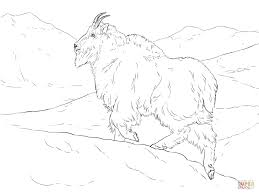 realistic mountain goat for coloring page animal prints