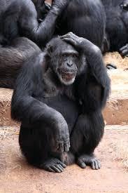 best 25 different types of monkeys ideas on pinterest types of