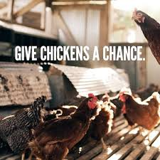 Can I Raise Chickens In My Backyard Getting Started With Chickens The Ultimate Guide Abundant