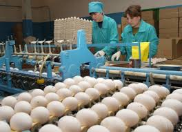Seeking Malaysia Ukraine Seeks To Supply Eggs Poultry To Malaysia Media Unian