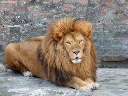 slike životinja iz beogradskog zoološkog vrta tt group