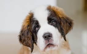 dogs wallpaper 6891026