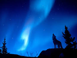 Anchorage Zoo Lights by Wolf And Northern Lights Northern Lights Pinterest Northern