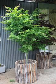winter hill tree farm courtyard pots