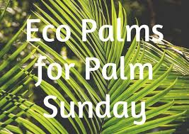 palms for palm sunday eco palms help our planet reformation lutheran church