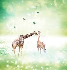 imagenes de amistad jirafas jirafas en imagen de la amistad o del concepto del amor foto de