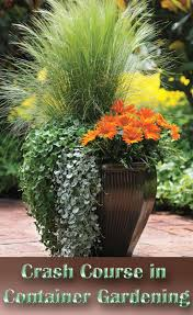 Container Gardening Ideas A Crash Course In Container Gardening Best Ideas On Pinterest