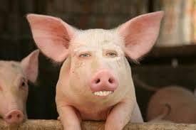 Nicolas Cage Face Meme - funniest nicolas cage face swap pictures funny website